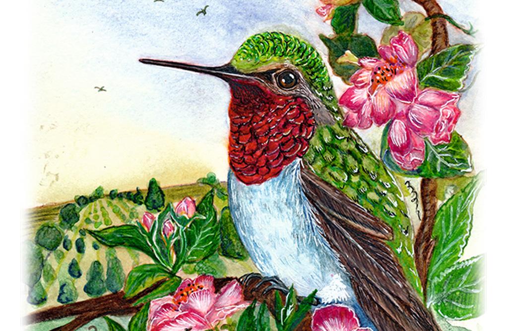 The Drama of the Hummingbird